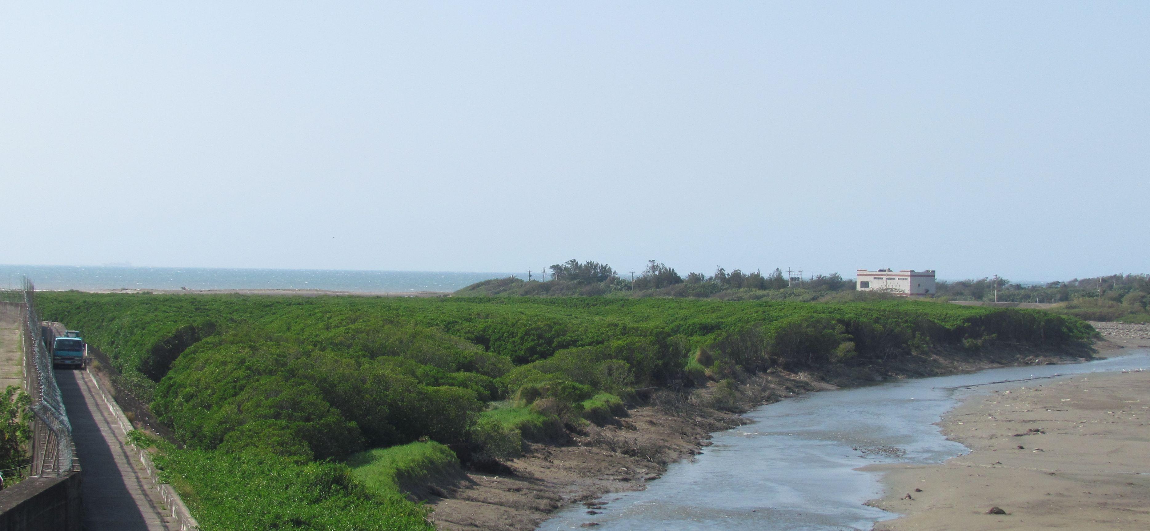 客雅溪口南岸紅樹林整治前後